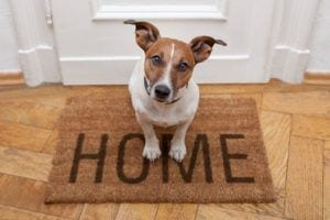 pet-friendly-alarm-home-security-keybury